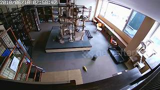 CCTV captures the reaction of cats before and after earthquake hit