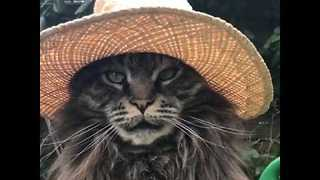 This Cat In a Hat Is Prettier Than a lot of Humans - Video