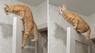 Cat shows off Spider-man skills while climbing closet door