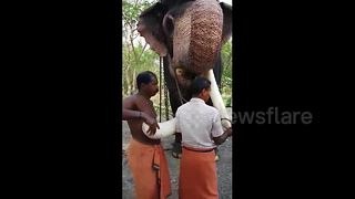 Abuse outcry after elephant gets prosthetic tusk - Video