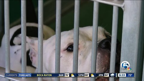 Palm Beach County Animal Care and Control shelter is at critical capacity