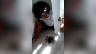 Toddler Boy Scared of Fake Spider! - Video