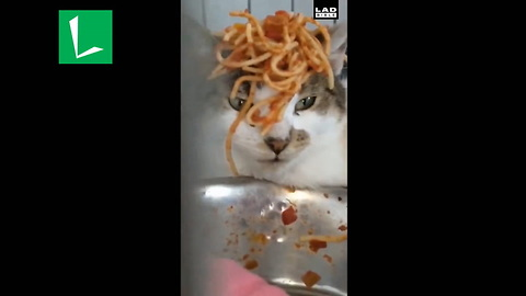 Dad Has Seen It All After Finding Baby Dumping Spaghetti On Cat's Head In Dog Crate