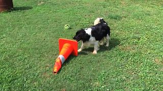 Silly Dog Loves Traffic Cones