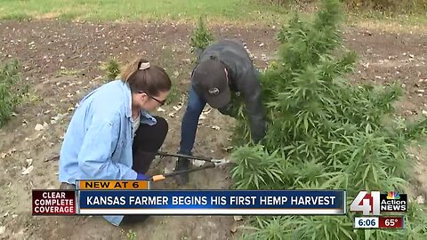Kansas farmer begins his first hemp harvest