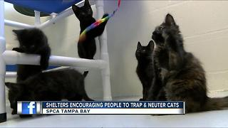 Kittens Galore! SPCA needs your help with strays - Video