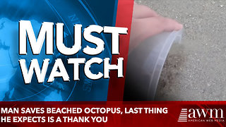 Man Saves Beached Octopus, Last Thing He Expects Is A Thank You - Video