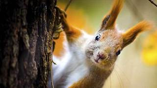 9 Adorable Animals (That'll Eat You If Given the Chance) - Video