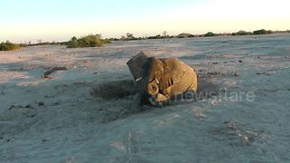 Tragic demise of baby elephant rescued by safari tourists - Video