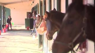 Horses evacuated from fire are reunited with their owners - Video