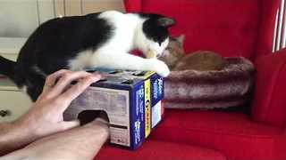 Cat Can't get Enough of 'Whack-A-Finger' Game - Video