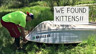 WOW! We found newborn kittens under a boat!  - Video