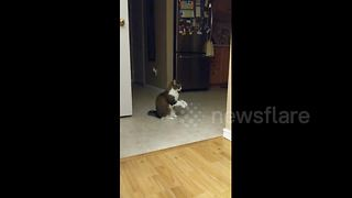 Cat shows owner she's hungry with adorable begging motion - Video