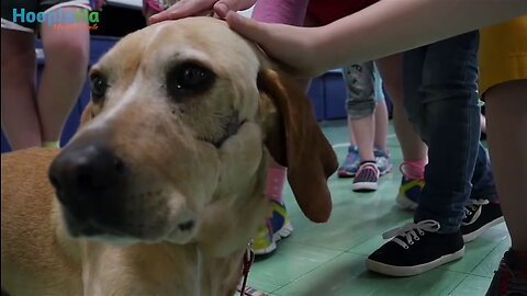 Abused Dog Inspires Hollywood Film 'Miracle Marshall'