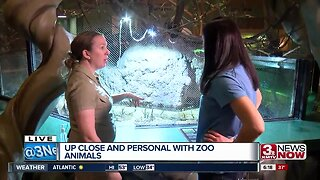 Up close and personal with animals at Henry Doorly Zoo and Aquarium