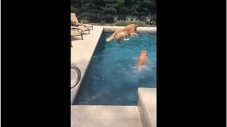 Dog Jumps Right On Top Of Sibling In Epic Slow Motion - Video