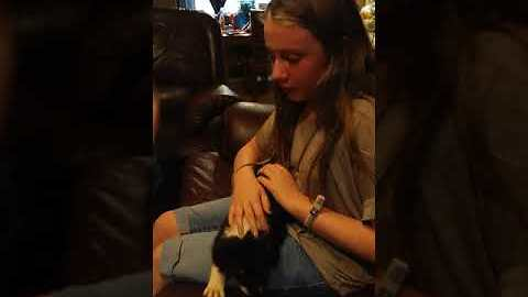 Tears flow for birthday puppy surprise