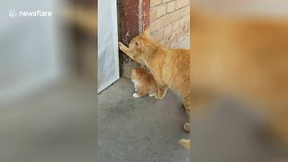 Protective Cat Mom Won't Let Her Baby Go Outside