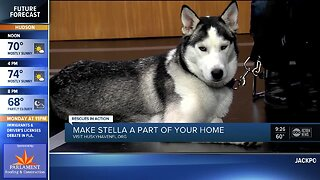 Rescues in Action Dec. 7 | Stella needs forever home
