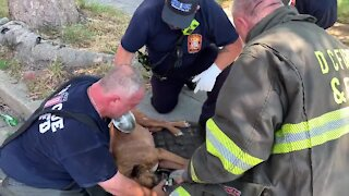 Firefighters Revive And Save Dog Rescued From Burning House