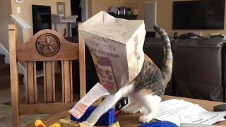 50 Epic Cat Fails | Best Of The Month - Video