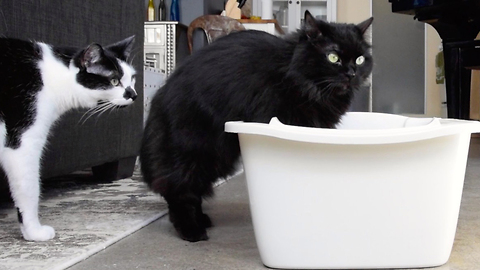 How to properly clean your cat's litter box
