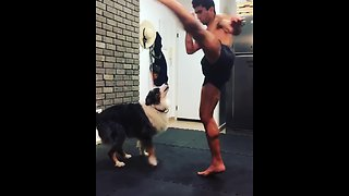 Dog spars with owner during boxing training - Video