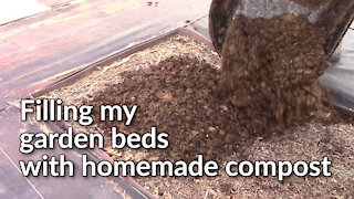 Filling my garden beds with homemade compost