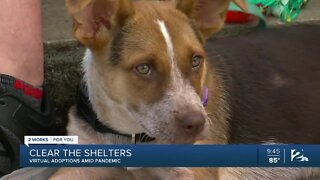 Clear the Shelters: Virtual Adoptions amid Pandemic