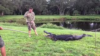 Trappers remove 11-foot alligator from pond in Clearwater