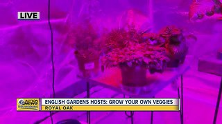 Growing Your Own Veggies