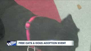 Free cats and dogs adoption event - Video