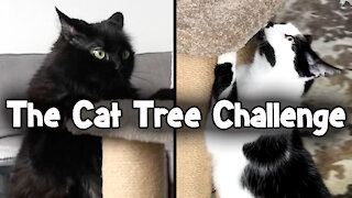 Cats perform their own Olympic event using their kitty tree