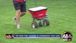 Tips from Toby: dangers of overseeding your lawn - Video