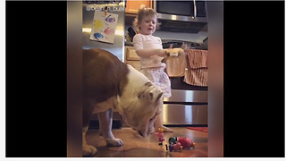 Bulldog knocks over little girl's toys