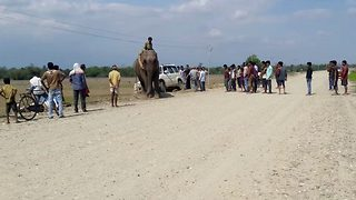 Incredible elephant rescue of stranded car