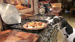 Great Dane samples meatball from meat lovers pizza