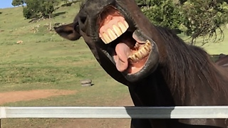 Slow Motion Captures Horse's Ridiculous Facial Expressions