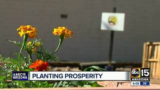 Community garden built in Phoenix vacant lot - Video
