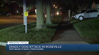Puppy killed and 3 people hurt after dog attack in Roseville
