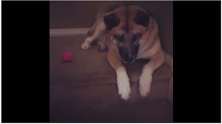 Selfish dog refuses to share ball with puppy - Video