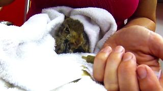 Orphaned baby rabbit receives life-saving assistance