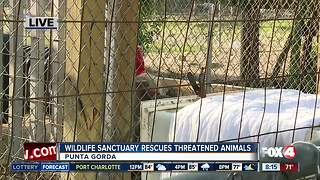 Octagon Wildlife Sanctuary rescues threatened, abused animals -- 8am live report - Video