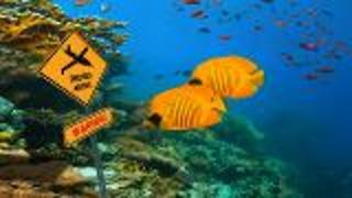 Drone Images of Coral Reefs - Video