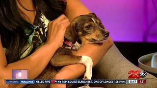 23ABC Pet of Week - Video
