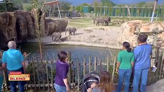 Zoo Tampa at Lowry Park - Video