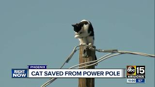 Cat saved from power pole in Phoenix - Video