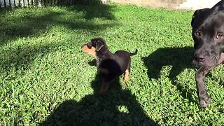 Adorable Bouncing Rescue Puppies Run In Excitement - Video