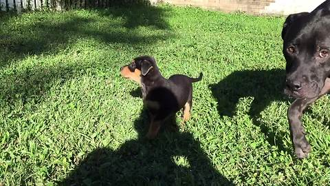Adorable Bouncing Rescue Puppies Run In Excitement