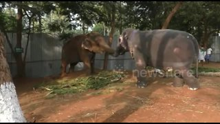 Two elephant friends have heartwarming reunion after a year apart - Video